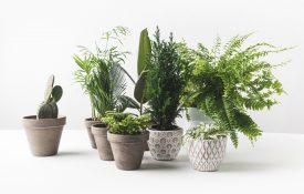 app per riconoscere le piante